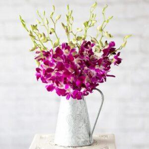 Oriental Orchids