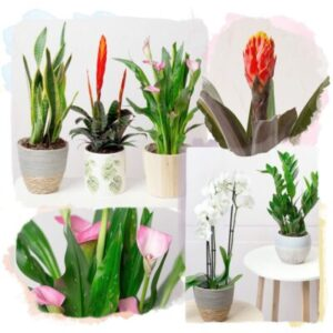 Monthly Plant Gift