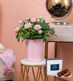Classic Rose Plant - Pink Rose Plant - Plant Gifts - Indoor Plants - Plant Delivery - Houseplants