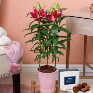Lily Plant - Indoor Plants - Plant Gifts - Plant Gift Delivery - House Plants - Home Plants