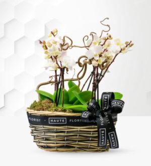 Luxury Orchid Basket