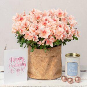 Birthday Azalea Gift Set